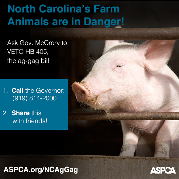 The Ag-gag Bill