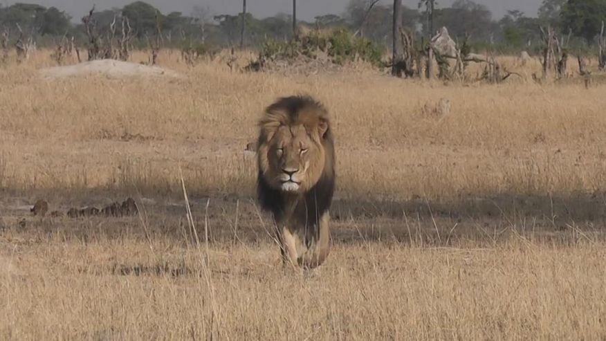 F*** your petitions,  tears, and outrage over Cecil The Lion